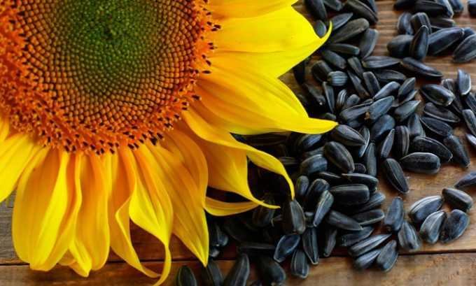 Витамин е содержится в семенах подсолнечника