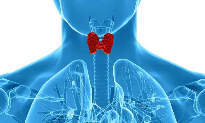 При легких формах гипертиреоза можно применять Левокарнил