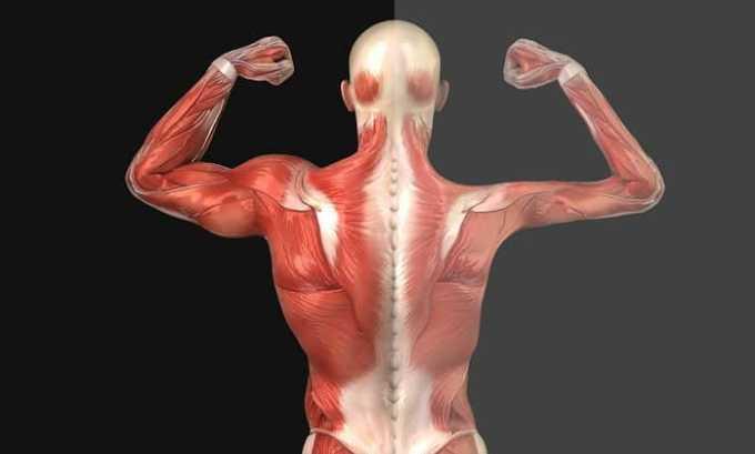 Данабол назначается при мышечной дистрофии