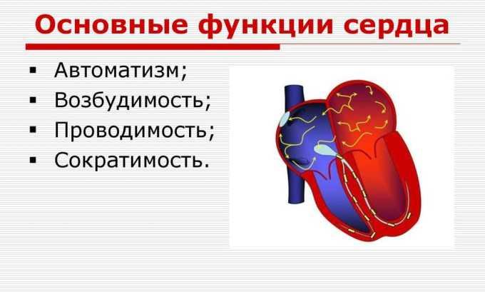 Левокарнитин поддерживает функцию сердца