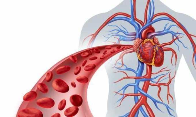 Тромбооблитерирующие заболевания кровеносных сосудов: рекомендуемая доза - 7-8 мг/кг веса, длительность курса - 10 инфузий, причем капельницы следует устанавливать через день