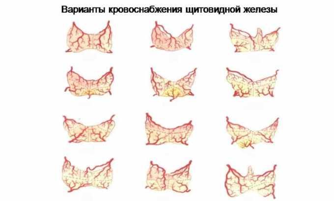 Чаще всего у человека более развитой является какая-то одна часть сосудов кровоснабжения щитовидной железы: либо верхние, либо нижние артерии