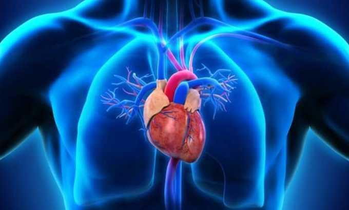 Анепро защищает сердечную мышцу от повреждения