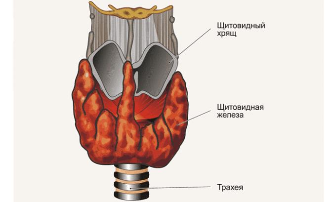Пациент выздоравливает, если осталось не менее 5% жизнеспособных тканей щитовидной железы