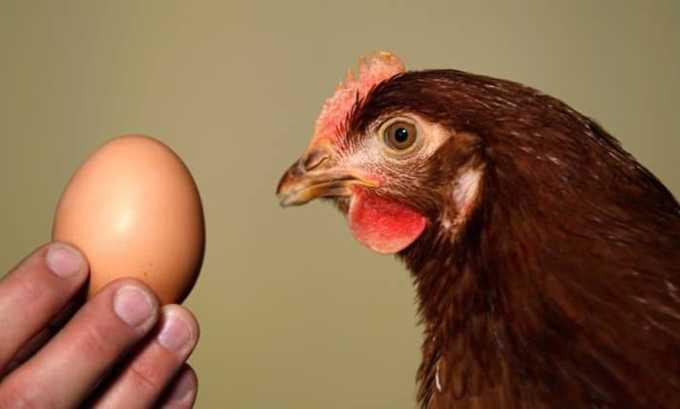Оба полезных компонента содержатся в яйцах домашней птицы