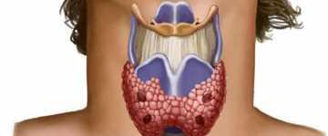 Особенности обменных процессов при патологии щитовидной железы