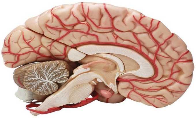 При хроническом нарушении кровообращения головного мозга назначают Левокарнил 500