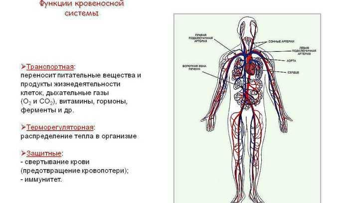 Рекомендуется принимать средство для поддержания функции кровеносной системы