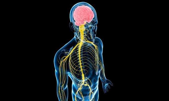 Обеспечивает нормальное функционирование нервной системы