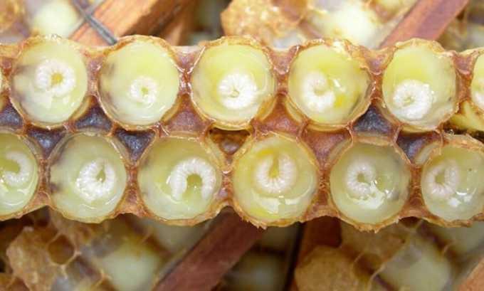 Пчелиное маточное молоко можно употреблять в свежем виде примерно от 25 до 30 мг три раза в сутки за полтора часа до употребления пищи