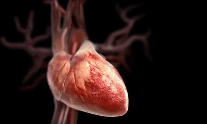 Левокарнил питает сердечную мышцу, предотвращает появление участков некроза