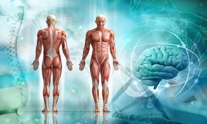 Карнитин укрепляет и тонизирует человеческое тело