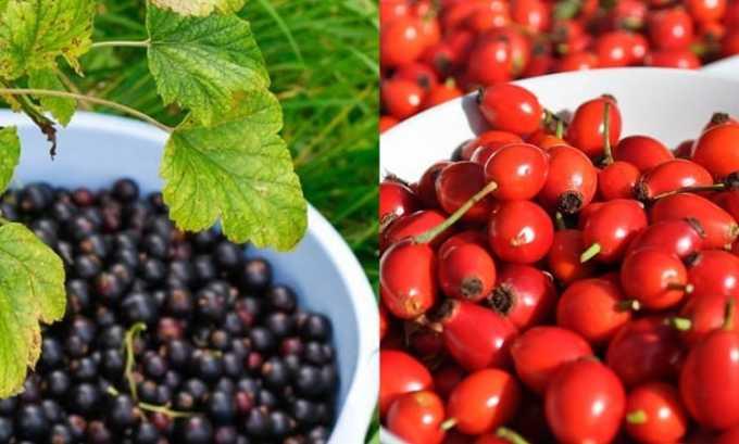 Народные рецепты включают в себя средства из плодов шиповника и черной смородины