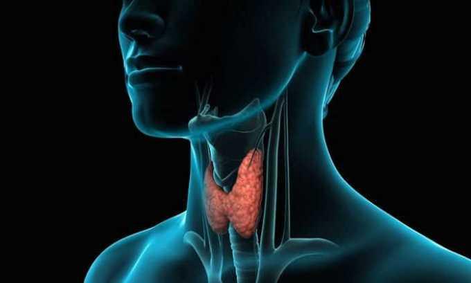 Процедура дает возможность оценить особенности строения железы и ее функции