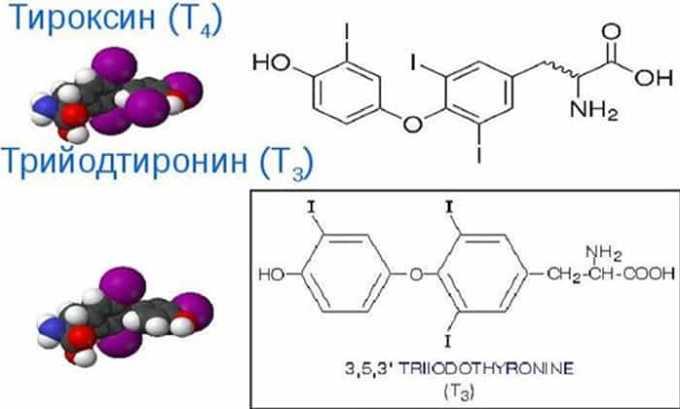 При отсутствии патологических процессов щитовидная железа синтезирует такие важные гормоны, как трийодтиронин и тироксин