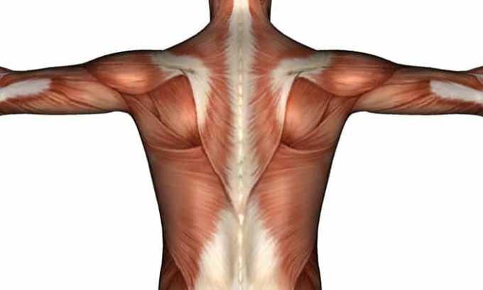 Благодаря витамину е происходит повышение прочности и улучшение развития мышц