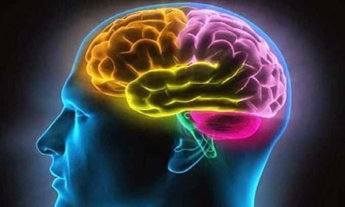 Лекарство Л-карнитин улучшает обменные процессы кислорода в головном мозге