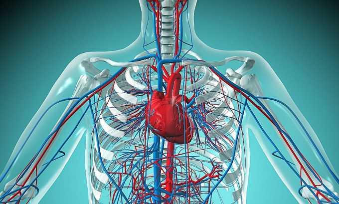 Элькар показан к применению при нарушениях работы сердечно-сосудистой системы