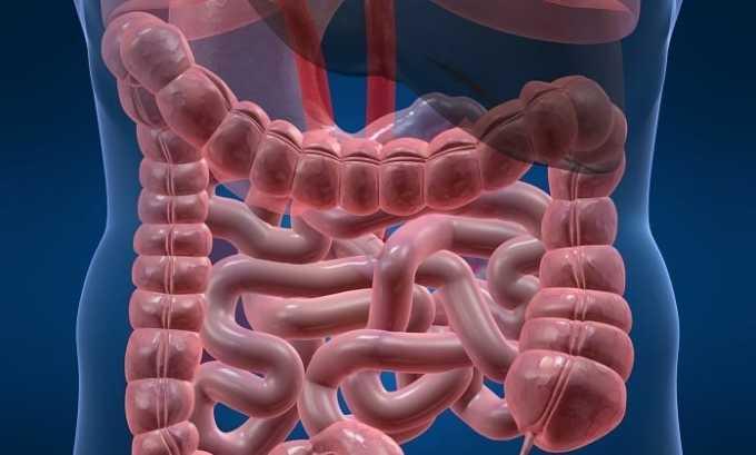 При всасывании микроворсинками тонкого кишечника Сорафениб попадает в системное сосудистое русло