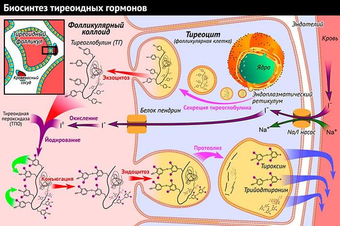 гормональная мазь против аллергии на коже
