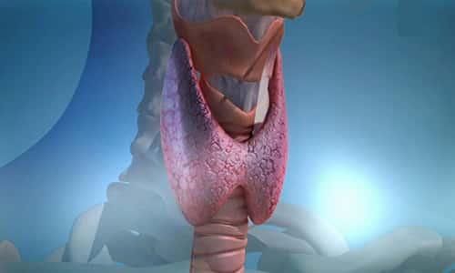 В норме щитовидная железа имеет гладкую форму. Этот важнейший орган внутренней секреции отвечает за обмен веществ в организме, выделяет гормоны, которые дают нам огромную жизненную энергию