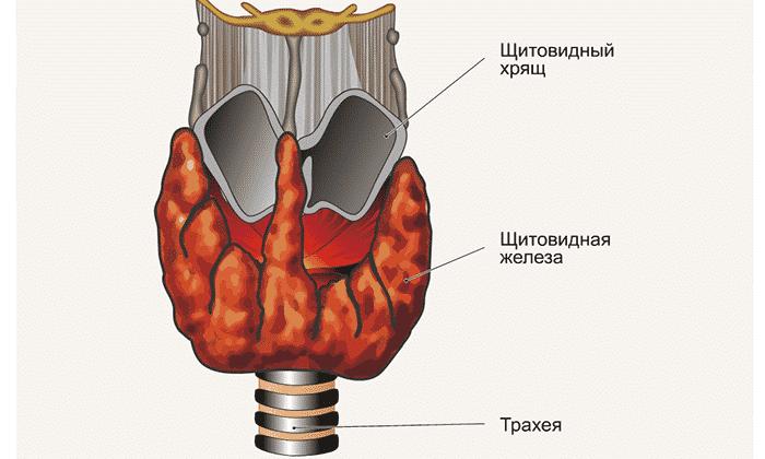 Чаще всего уменьшение или увеличение способности щитовидной железы отражать ультразвук предупреждает об онкологическом заболевании