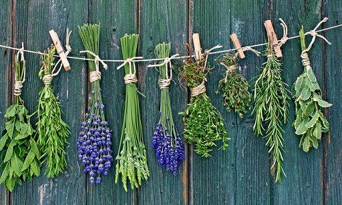 Лекарственные травы для щитовидной железы применяют при повышенной и пониженной функции органа, опухолевых заболеваниях в качестве дополнительной терапии