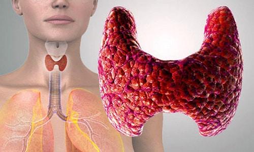 В обеспечении нормального кровоснабжения органа участвуют пара нижних и пара верхних артерий, за счет которых происходит поддержка хорошего кровоснабжения железы