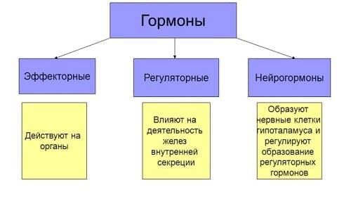 Функции гормонов