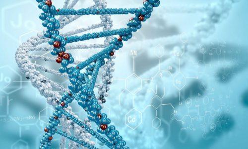 Наследственная разновидность МРЩЖ передается от ближайших родственников на генном уровне
