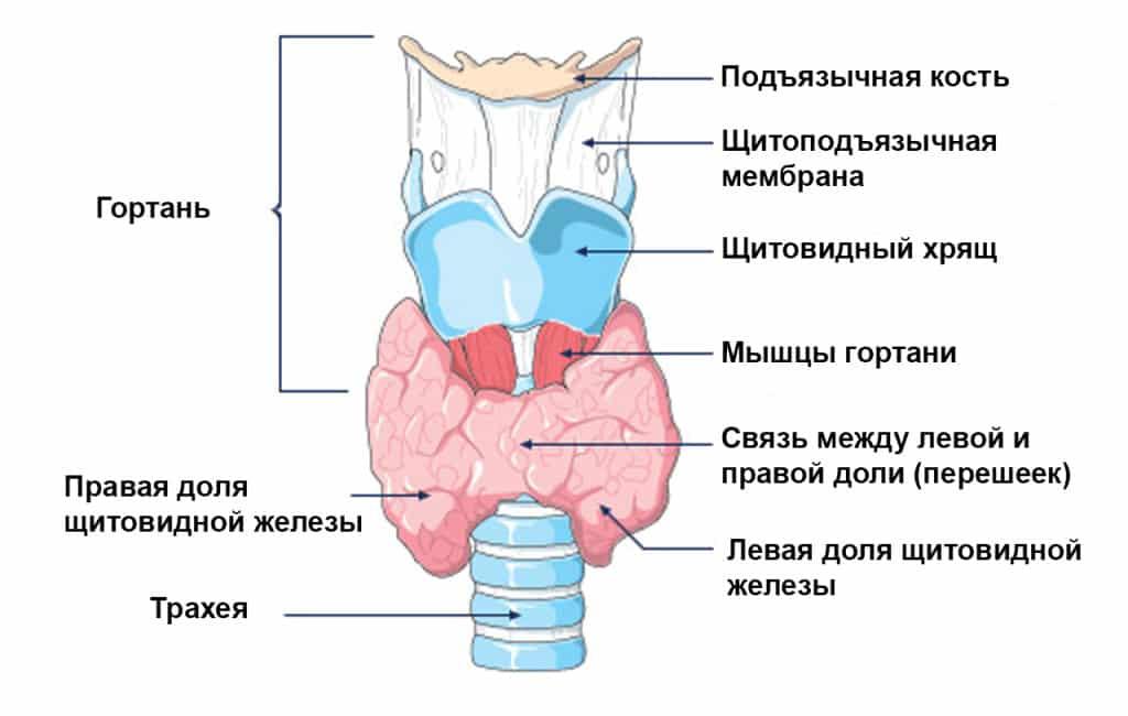 воспаление щитовидный железы диета стол