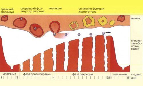 Заболевания щитовидной железы могут привести к задержке месячного цикла