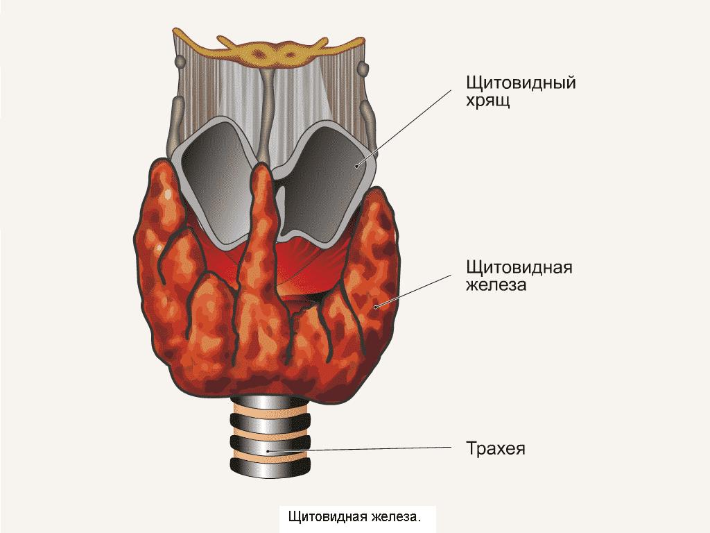 Гало аппарат шейного отдела
