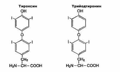 Щитовидная железа производит 2 гормона — трийодтиронин и тироксин