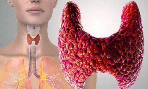 Гормоны щитовидной железы воздействуют на организм человека, а также влияют на основной обмен веществ