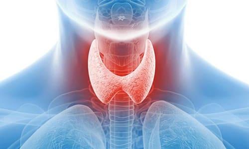 Патологические процессы эндокринной системы входят в число самых распространенных физиологических отклонений