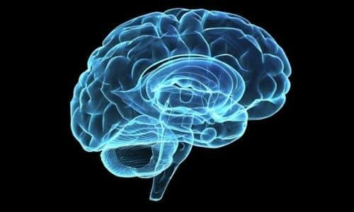 Трийодтиронин и тироксин ответственны за работу головного мозга
