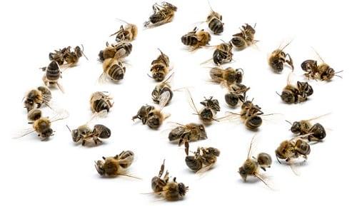 Пчелиный подмор обладает ранозаживляющим действием и борется с патологическими изменениями щитовидной железы