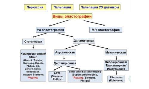 Эластография бывает двух видов: динамическая и статическая