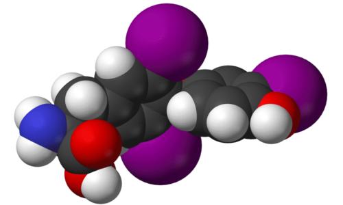 Тиреоидный гормон Т4 общий (тироксин, тетрайодтиронин), продуцируемый щитовидной железой и входящий в состав ее фолликулярного коллоидного вещества, представляет собой сумму связанного с белками неактивного гормона и секрета, находящегося в свободном виде