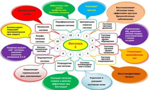 Масло токоферола по фармакологической группе относится к витаминам и витаминоподобным веществам