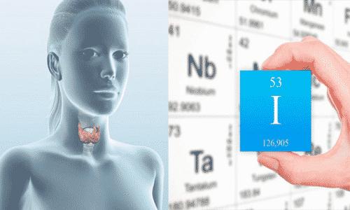 Йод участвует в образовании гормонов эндокринной железы - трийодтиронина (Т3) и тироксина (Т 4)