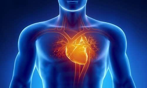 Частота сокращений снижается, что способствует удлинению диастолы и существенному улучшению питания сердечной мышцы
