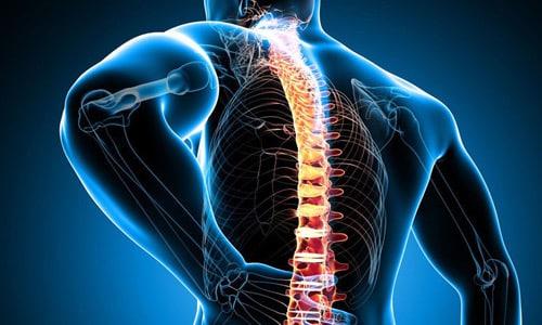 Препарат устраняет болевой синдром, замедляет разрушение хрящевых тканей при заболеваниях опорно-двигательного аппарата
