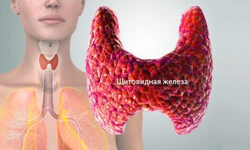 Препарат направлен в основном на устранение недостатка гормонов щитовидной железы