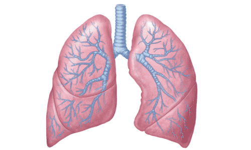 Препарат не назначают при тяжелых формах обструктивной болезни легких