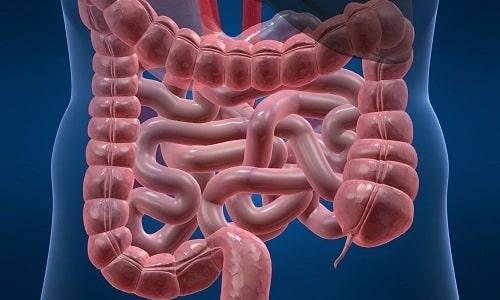 При пероральном приеме внутрь карнитин быстро всасывается микроворсинками кишечного тракта